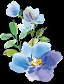青いお花のイラスト