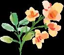 オレンジ色のお花のイラスト