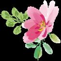 ピンクのお花のイラスト